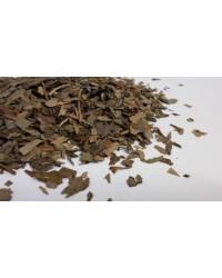 Ginkgo Biloba  Ceai Plante